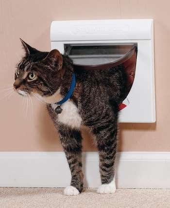 Кот и кошачья дверь