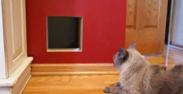 Кот лежит возле двери