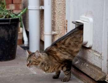 Кот выходит через кошачью дверь